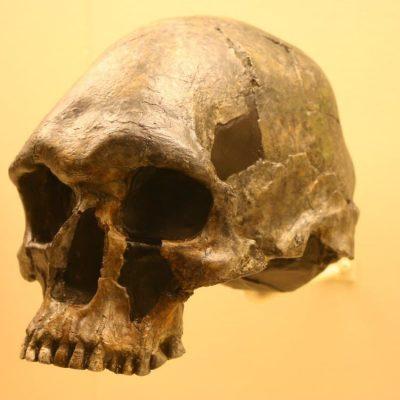 Aboriginal bones